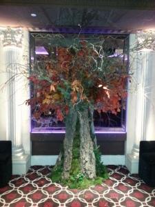 outset tree